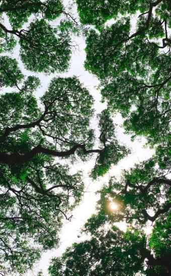 Sky Sun Greenry Wallpaper 340x550