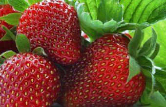 Strawberry Berry Sweet Wallpaper 1920x1080 340x220