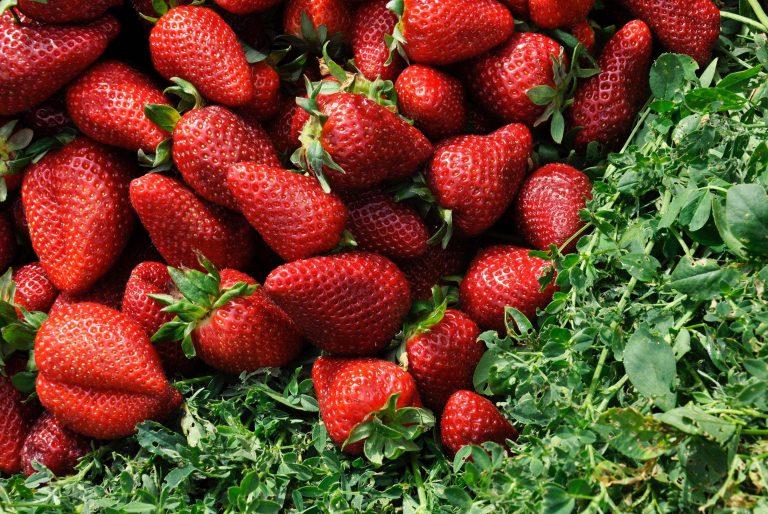Strawberry Wallpaper 22 3960x2648 768x514
