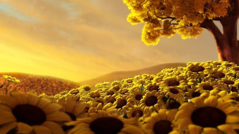 Sun Flower World HD Wallpaper 1920x1080 768x432