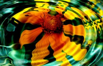 Sunflower In Water Wallpaper 1600x1200 340x220