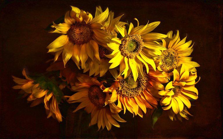 Sunflower Wallpaper 02 1920x1200 768x480