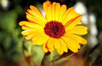 Sunflower Wallpaper 11 2560x1600 340x220