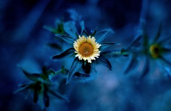 Sunflower Wallpaper 19 1920x1200 340x220