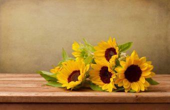 Sunflower Wallpaper 33 1800x1200 340x220