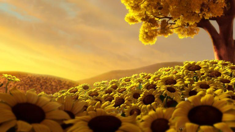Sunflowers Field Wallpaper 1920x1080 768x432
