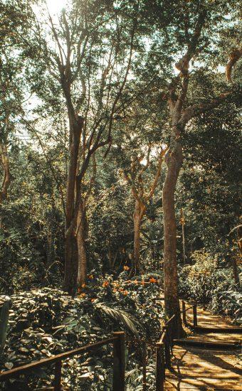 Sunny Jungle View Wallpaper 340x550
