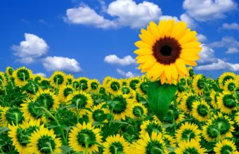 Sunshine To Brighten Your Day Wallpaper 1920x1200 340x220