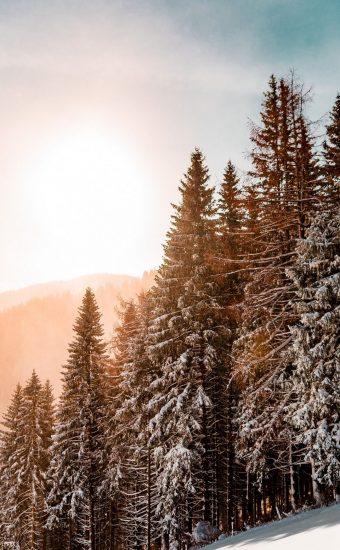 Trees Snow Wallpaper 340x550