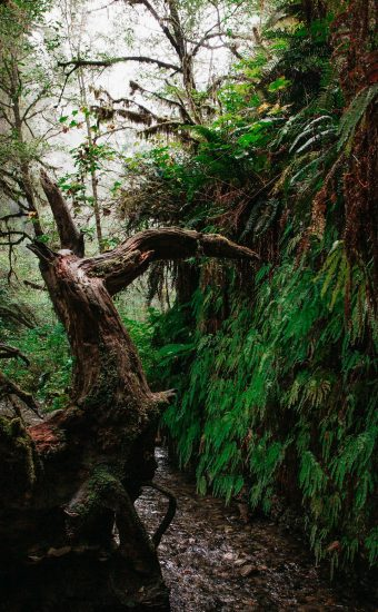 Trees Trunk Wallpaper 340x550