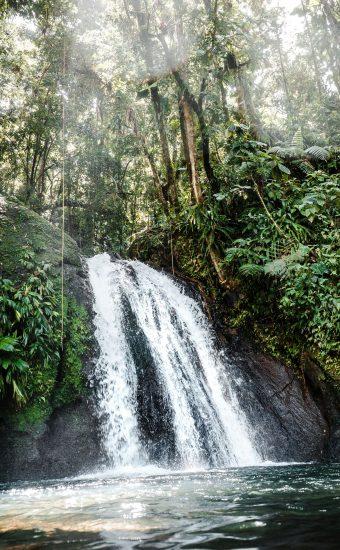 Waterfall Trees Wallpaper 340x550