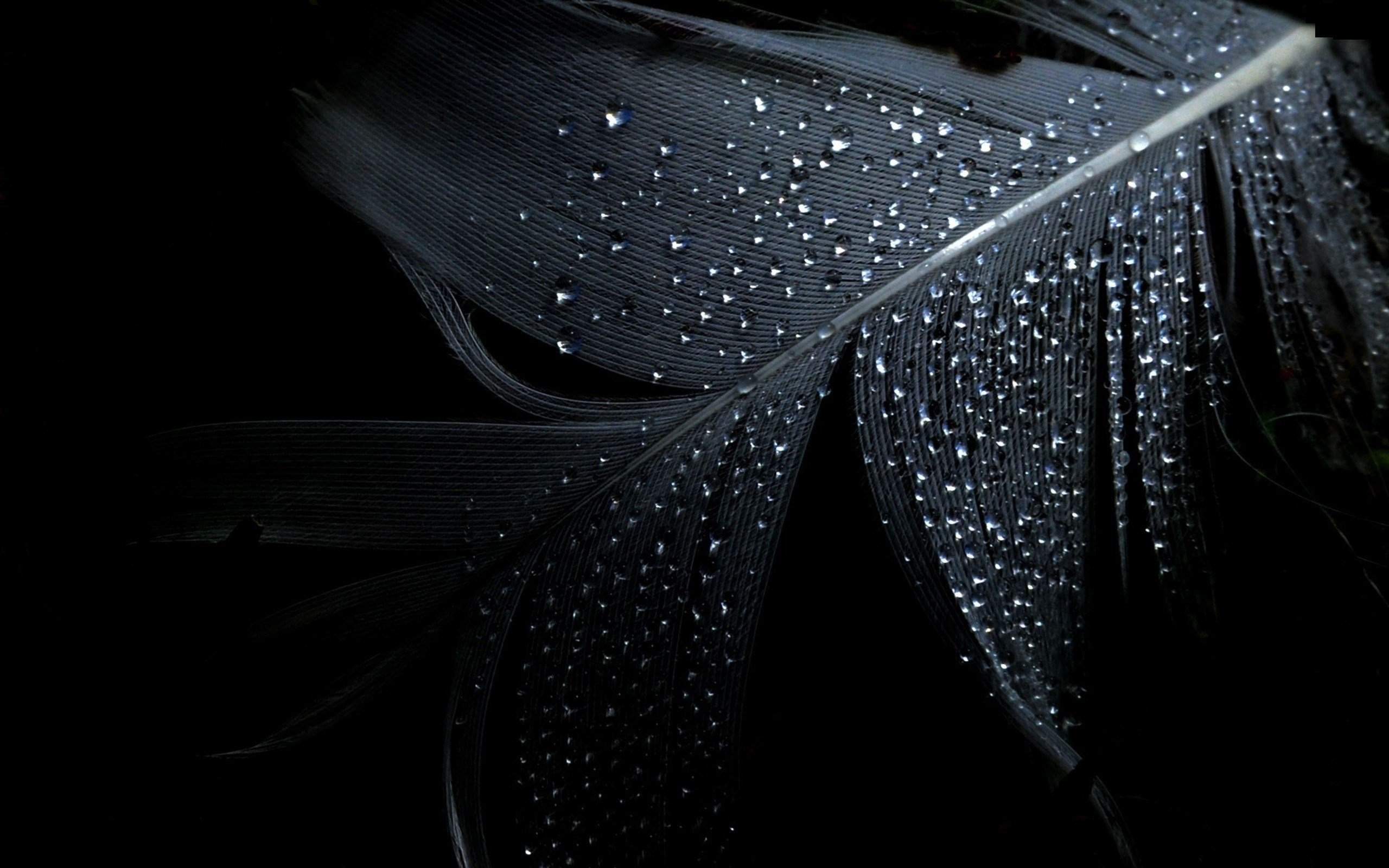 Home Water Filter >> Wet Water Drops Black Background Wallpaper [2560x1600]