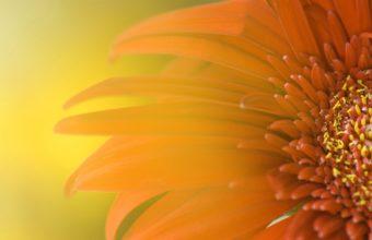 Widescreen Sunflower Wallpaper 1920x1200 340x220