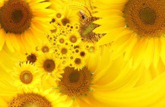 Yellow Sunflowers Wallpaper 1920x1200 340x220