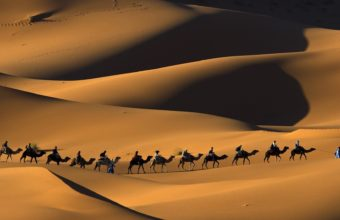 deserts camels Morocco sahara 340x220