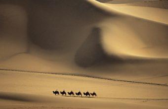 nature sand deserts camels dunes 340x220