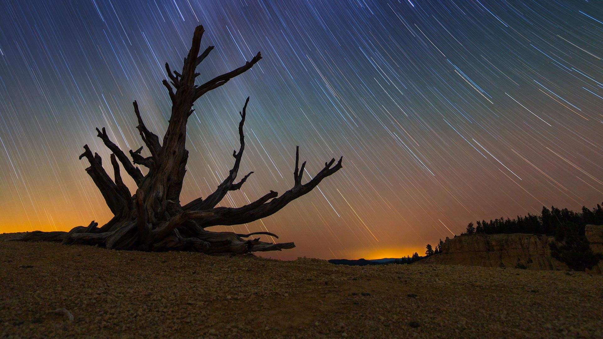 star trails and a bristlecone pine at bryce canyon national park, utah