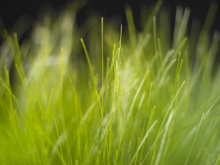 Grass Wallpapers 01 1600 x 1200 768x576