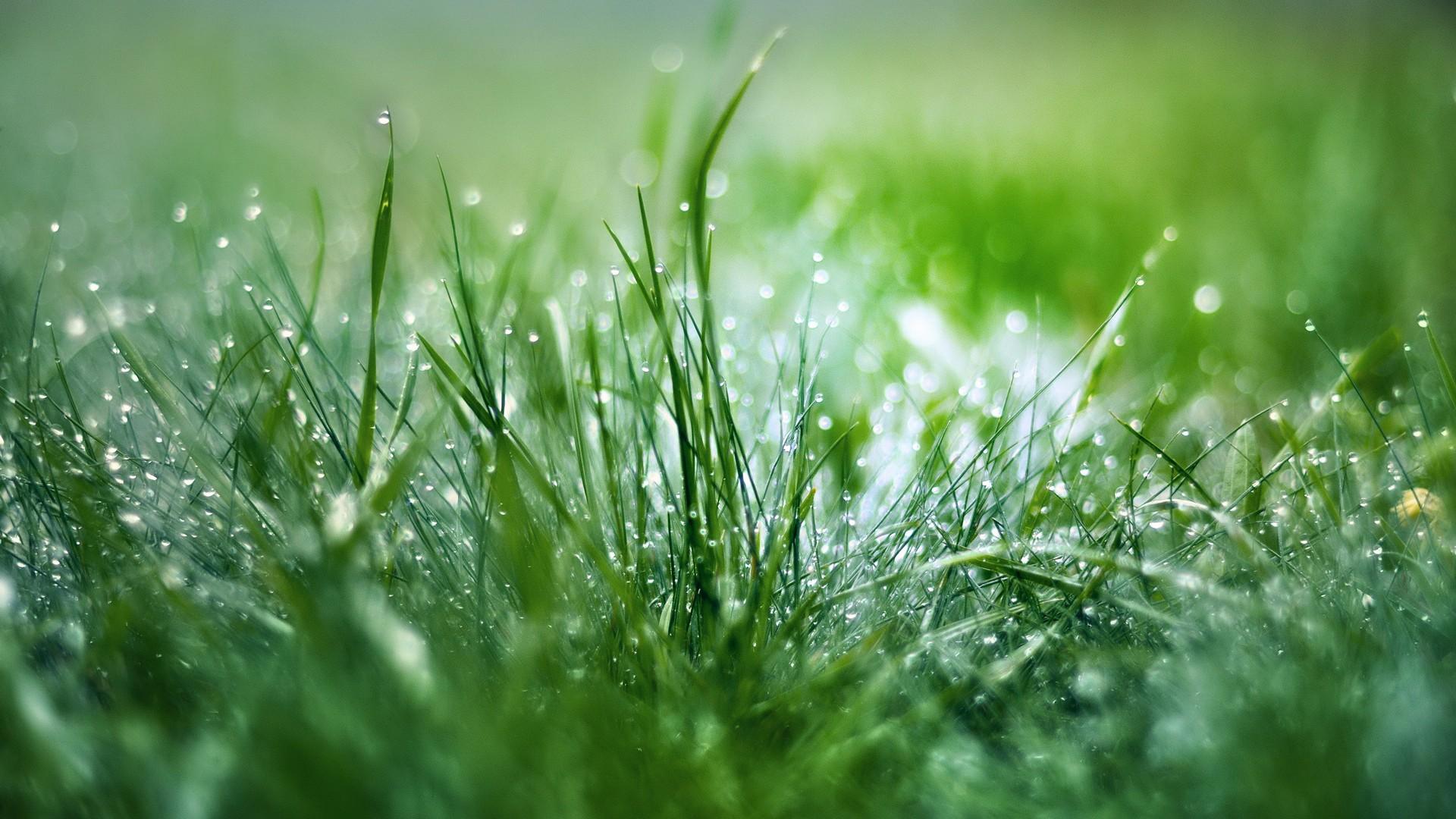 дождь трава цветы природа на телефон