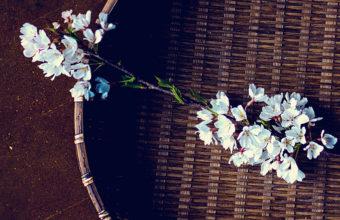 Huawei Honor 6 Wallpapers 23 1080 x 1920 340x220
