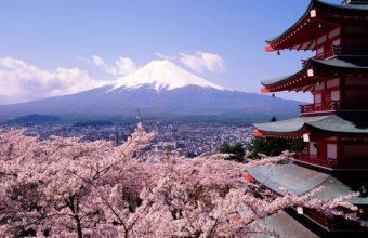 Sakura Wallpaper 11 1024x768 340x220