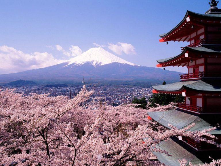 Sakura Wallpaper 11 1024x768 768x576