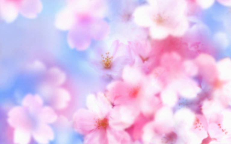 Sakura Wallpaper 12 1920x1200 768x480