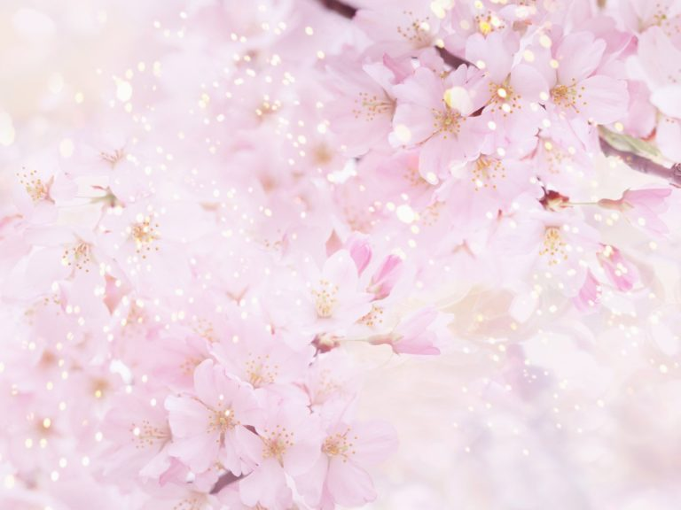 Sakura Wallpaper 17 1600x1200 768x576