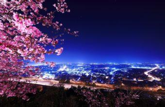 Sakura Wallpaper 39 1680x1050 340x220