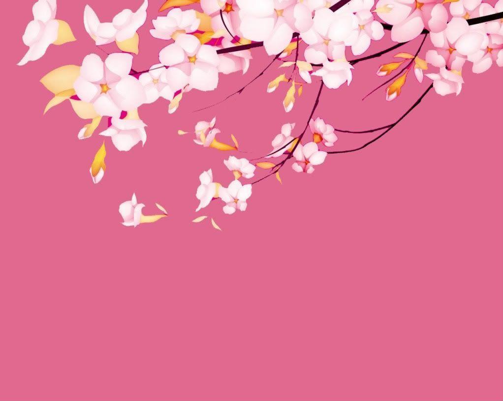 sakura wallpaper 4 1022x815