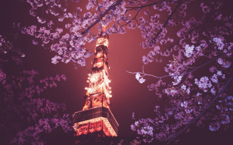 Sakura Wallpaper 40 1920x1200 768x480