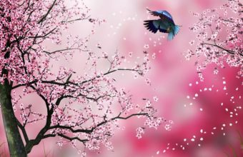 Sakura Wallpaper 6 1920x1080 340x220