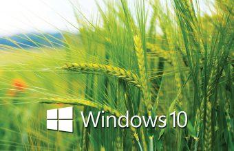 Windows 10 Wallpaper 49 2560x1440 340x220