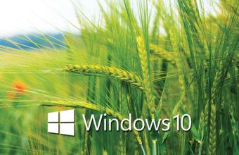 Windows 10 Wallpapers 29 2560 x 1440 340x220