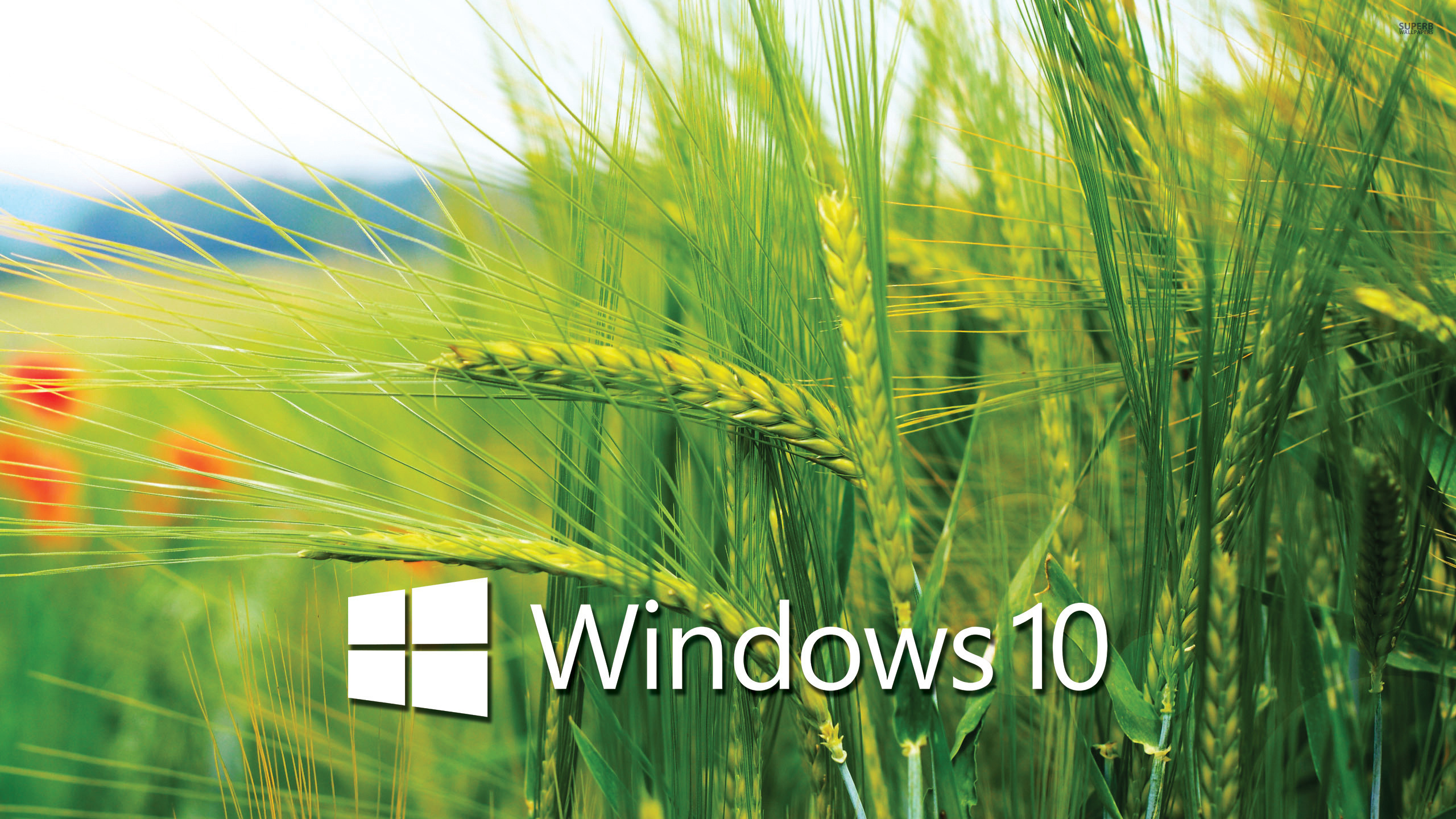 Windows 10 Wallpapers 29