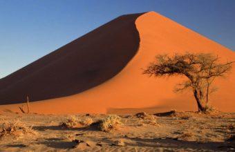 Acacia Namibia Sand Dunes Africa 1365 x 768 340x220