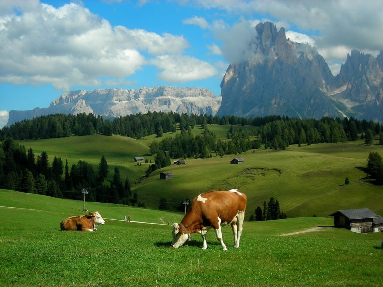 Alps Meadows Hills Mountains Cows 2592 x 1944 768x576