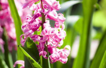 Amazing Pink Flowers 2560 x 1600 340x220
