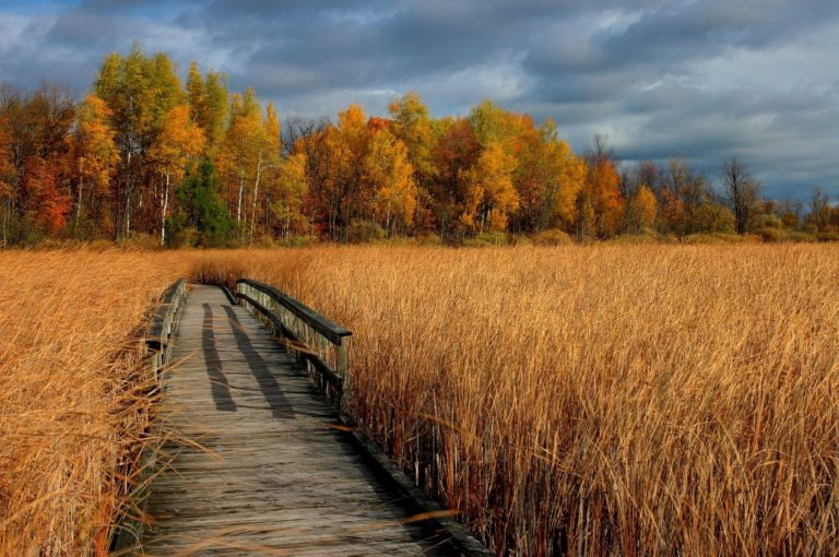 Autumn Dry Grass Bridge Trees 2048 X 1361 768x510