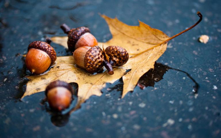 Autumn Fall Mood Puddle Rain 1920 X 1200 768x480