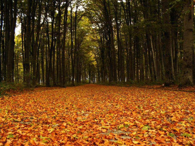 Autumn Forest Leaves Road 2304 X 1728 768x576