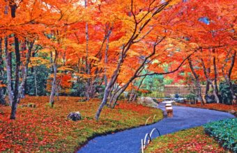 Autumn Park 2000 X 1549 340x220