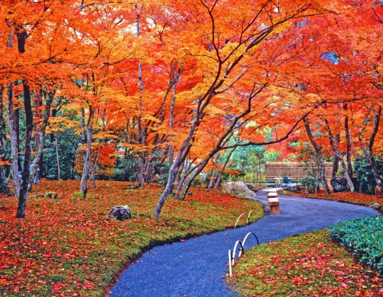 Autumn Park 2000 X 1549 768x595