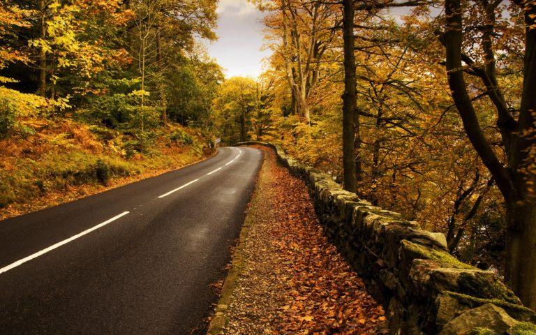 Autumn Road Wallpaper 2560 X 1600 768x480