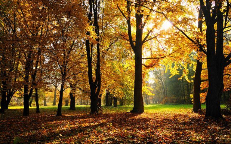 Autumn Season 1920 X 1200 768x480
