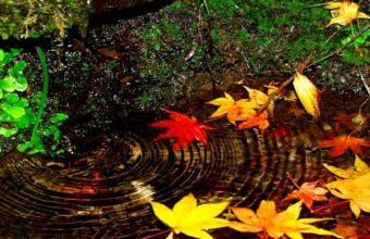 Autumn Swirl 1920 X 1200 340x220
