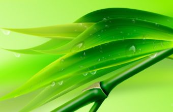 Green Leaves Wallpapers Hd