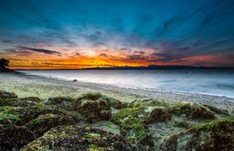 Beach Grass Moss 3840 x 2400 340x220