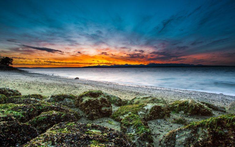 Beach Grass Moss 3840 x 2400 768x480