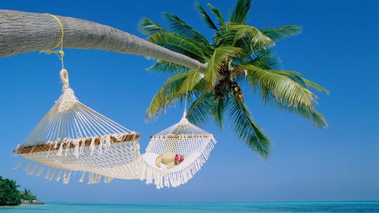 Beaches Hammock Palm Trees 1920 x 1080 768x432
